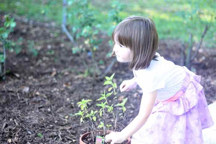 tabi + garden